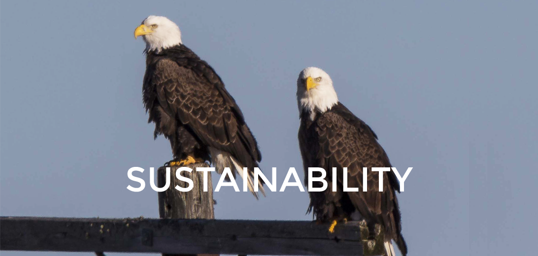 St Croix Tissue: Sustainability